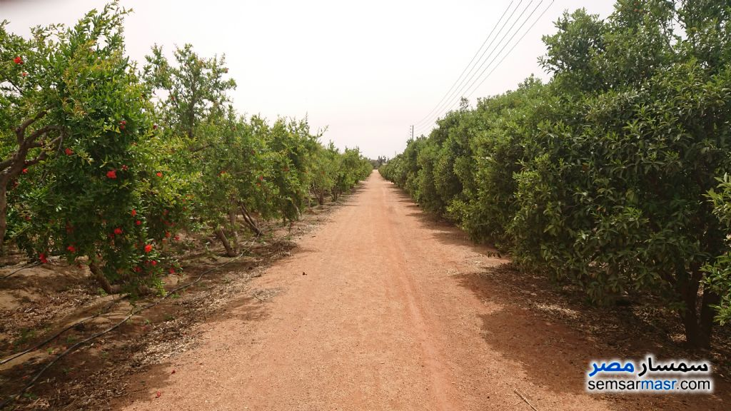 Ad Photo: Farm 17 acre in Ismailia
