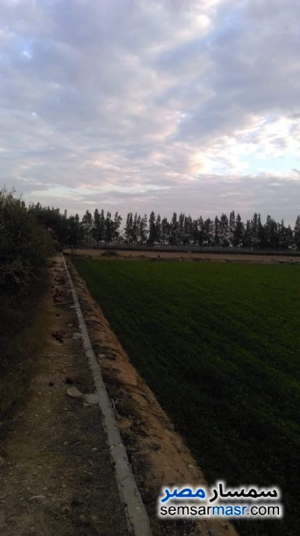 Photo 3 - Farm 10 acre For Sale Borg Al Arab Alexandira
