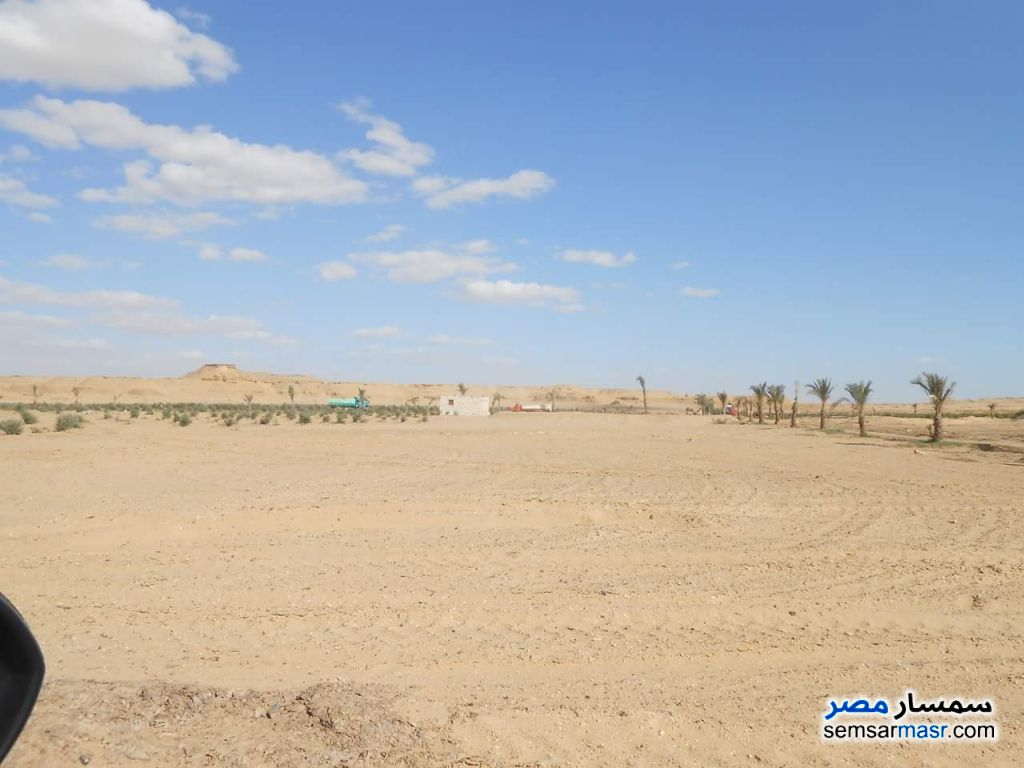 Photo 2 - Farm 21 acre For Sale Fayoum City Fayyum
