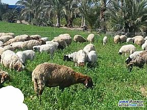 Ad Photo: Farm 200 acre in Cairo Alexadrea Desert Road  Alexandira
