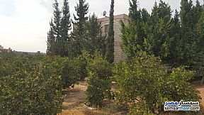 Ad Photo: Farm 5 acre in Ismailia City  Ismailia