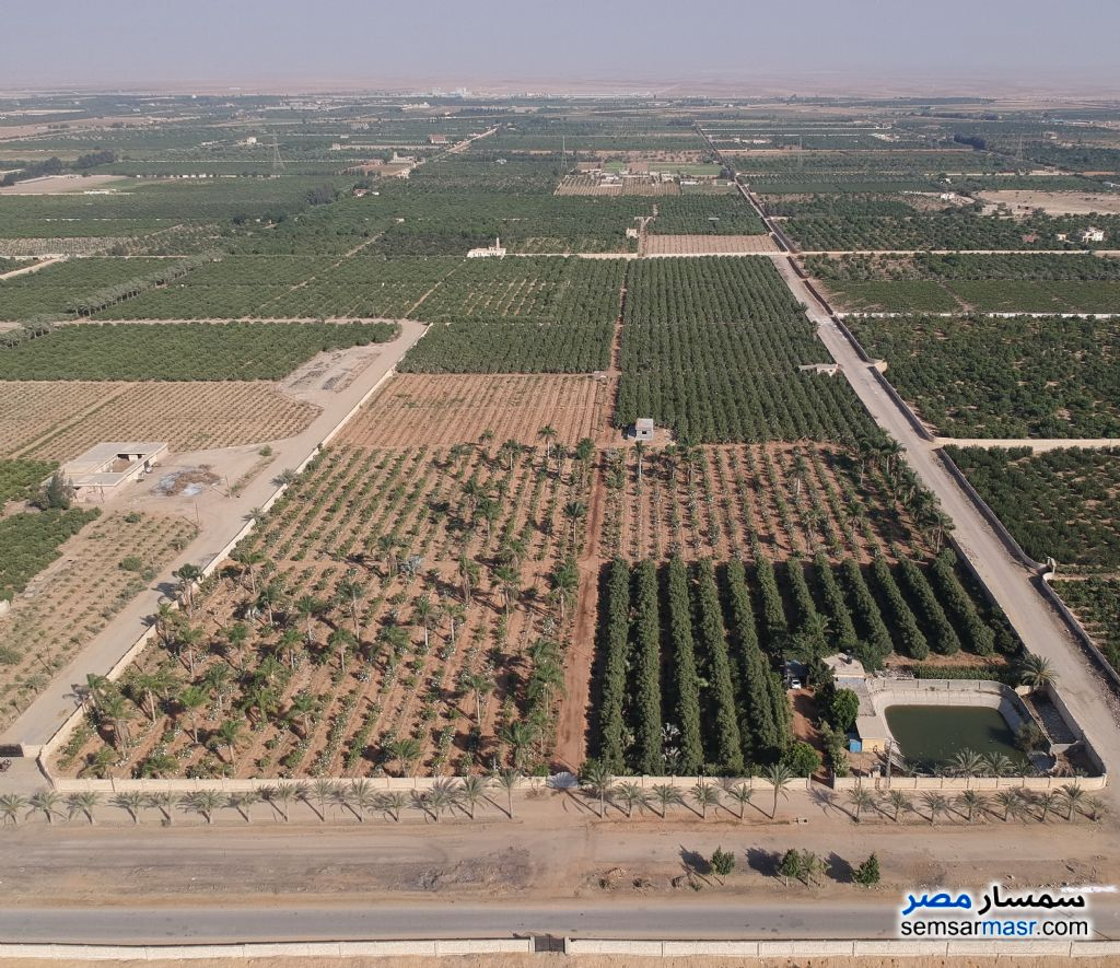 Ad Photo: Farm 24 acre in Sharqia