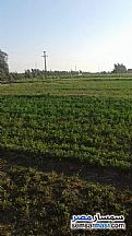 Ad Photo: Farm 9 acre in Borg Al Arab  Alexandira