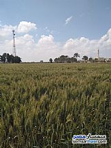 Ad Photo: Farm 14 acre in Borg Al Arab  Alexandira