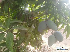 Ad Photo: Farm 15 acre in Sharqia