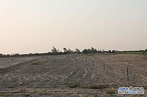 Farm 17 acre For Sale Wadi Al Natrun Buhayrah - 10