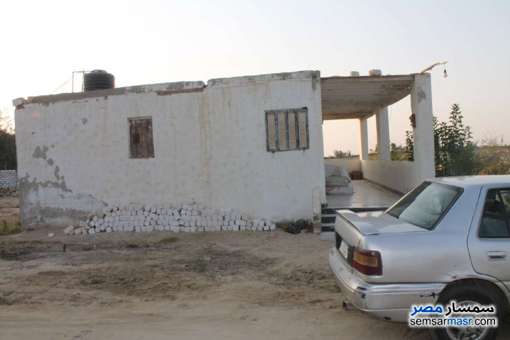 Photo 2 - Farm 17 acre For Sale Wadi Al Natrun Buhayrah