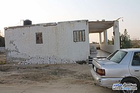 Farm 17 acre For Sale Wadi Al Natrun Buhayrah - 2