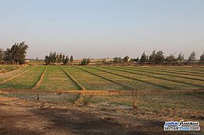 Farm 17 acre For Sale Wadi Al Natrun Buhayrah - 12