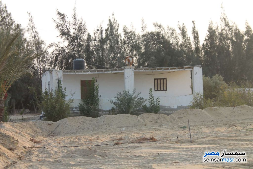 Photo 13 - Farm 17 acre For Sale Wadi Al Natrun Buhayrah