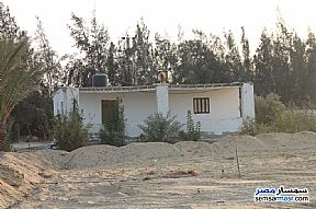 Farm 17 acre For Sale Wadi Al Natrun Buhayrah - 13