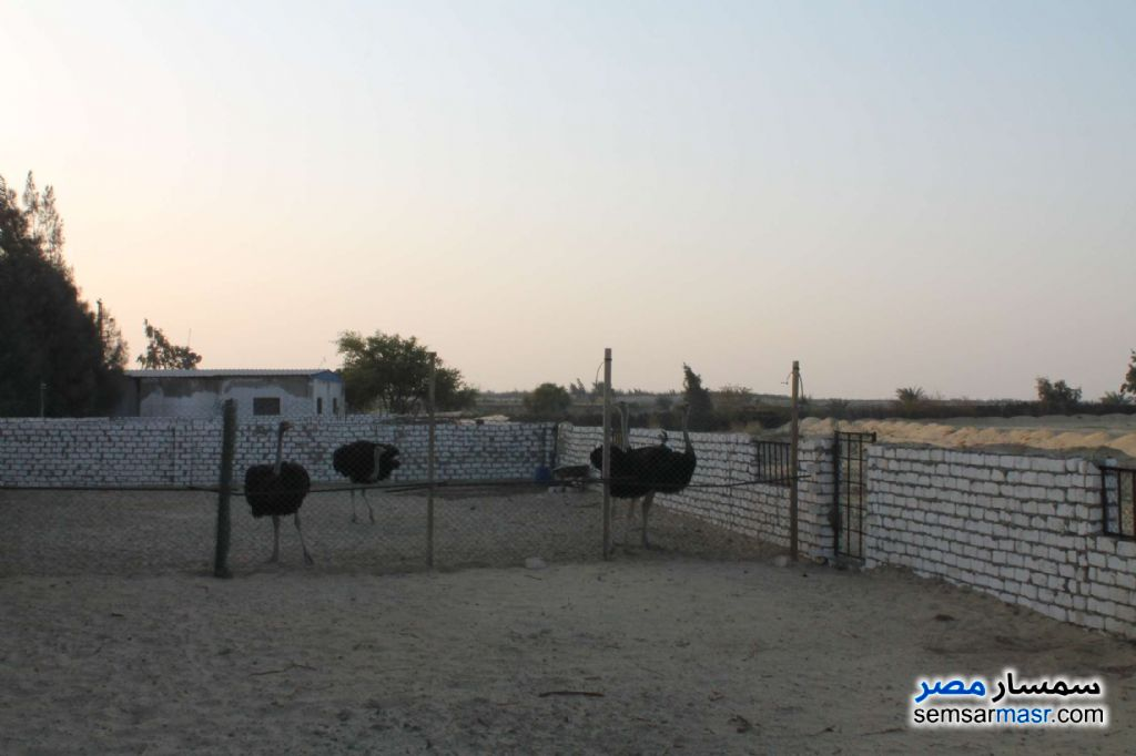 Photo 14 - Farm 17 acre For Sale Wadi Al Natrun Buhayrah