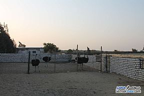 Farm 17 acre For Sale Wadi Al Natrun Buhayrah - 14