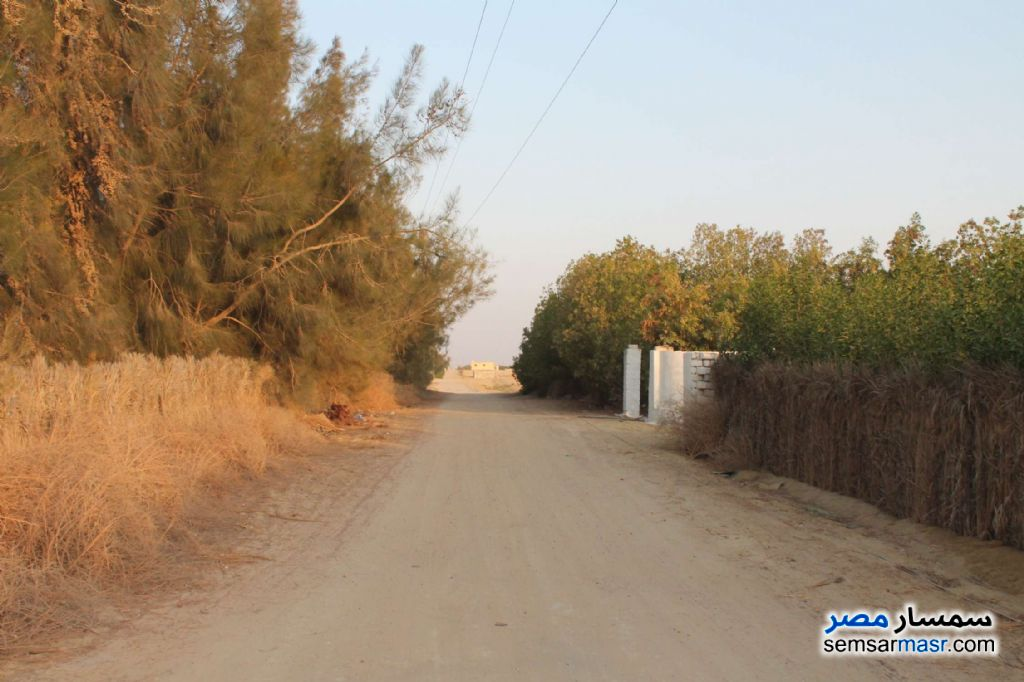 Photo 15 - Farm 17 acre For Sale Wadi Al Natrun Buhayrah