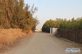 Farm 17 acre For Sale Wadi Al Natrun Buhayrah - 15
