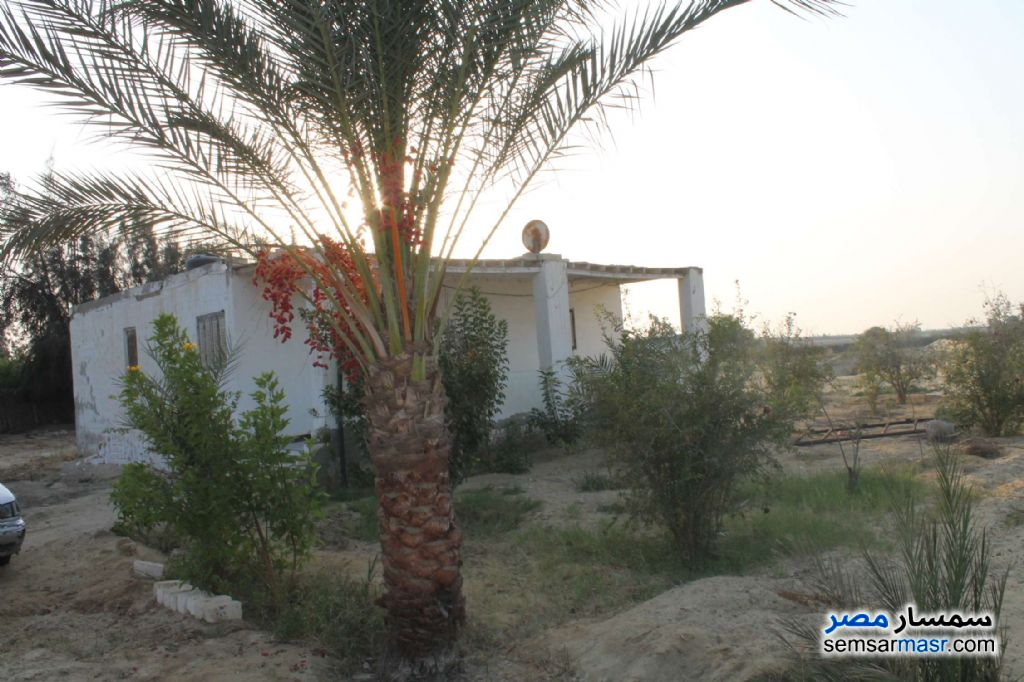 Photo 3 - Farm 17 acre For Sale Wadi Al Natrun Buhayrah