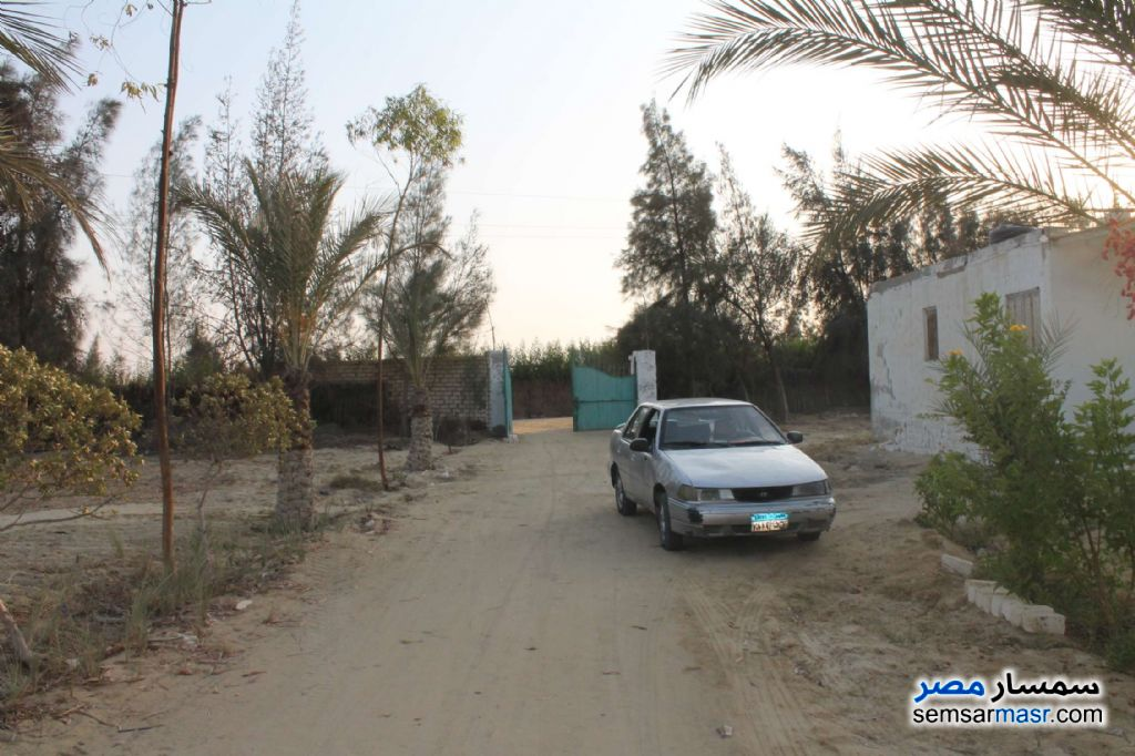 Photo 1 - Farm 17 acre For Sale Wadi Al Natrun Buhayrah