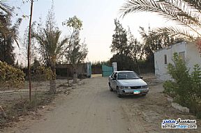 Ad Photo: Farm 17 acre in Wadi Al Natrun  Buhayrah