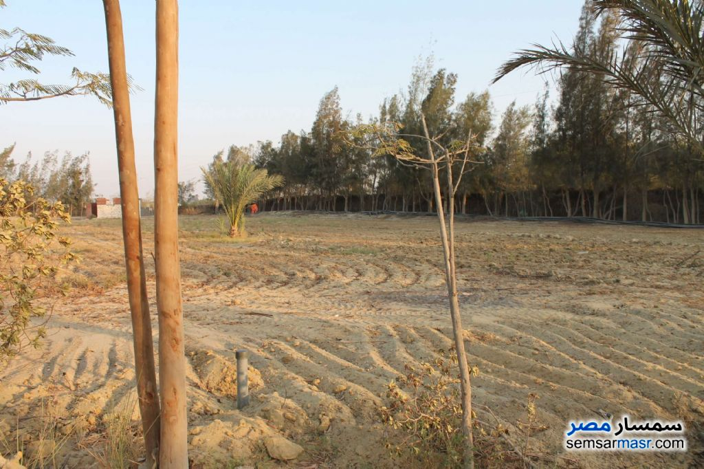 Photo 4 - Farm 17 acre For Sale Wadi Al Natrun Buhayrah