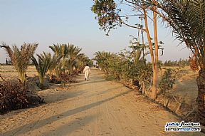 Farm 17 acre For Sale Wadi Al Natrun Buhayrah - 6