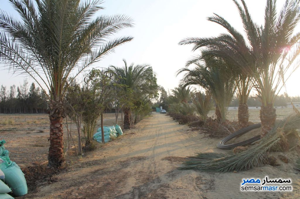 Photo 7 - Farm 17 acre For Sale Wadi Al Natrun Buhayrah
