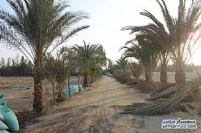 Farm 17 acre For Sale Wadi Al Natrun Buhayrah - 7