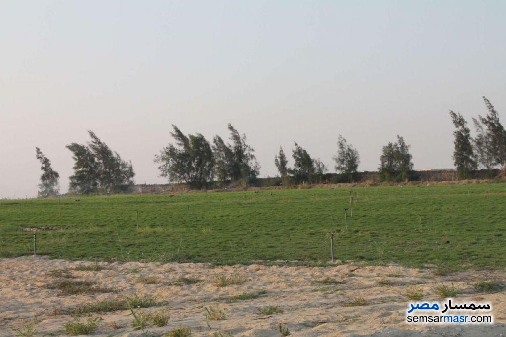 Photo 9 - Farm 17 acre For Sale Wadi Al Natrun Buhayrah