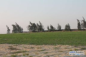 Farm 17 acre For Sale Wadi Al Natrun Buhayrah - 9