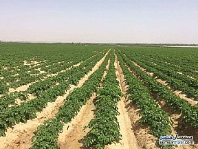 Ad Photo: Farm 25 acre in Fayoum City  Fayyum