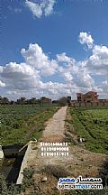 Ad Photo: Farm 40 acre in Borg Al Arab  Alexandira
