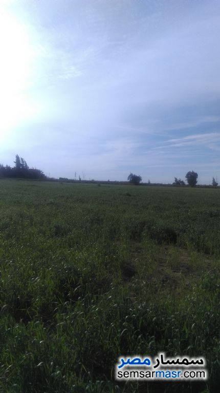 Photo 7 - Farm 60 acre For Sale Amereyah Alexandira