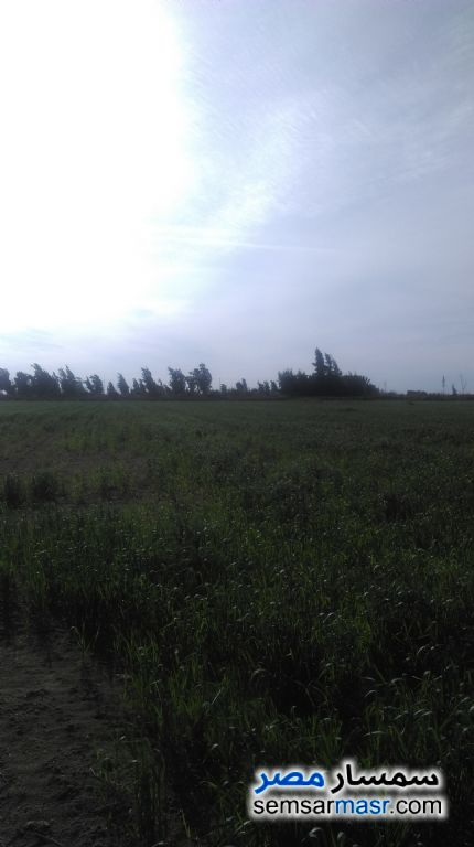 Photo 8 - Farm 60 acre For Sale Amereyah Alexandira