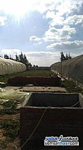 Ad Photo: Farm 3 acre in Borg Al Arab  Alexandira