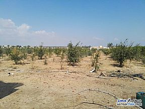 Ad Photo: Farm 5 acre in Borg Al Arab  Alexandira