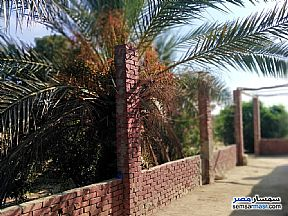 Farm 10 acre For Sale Qantara Sharq Ismailia - 3