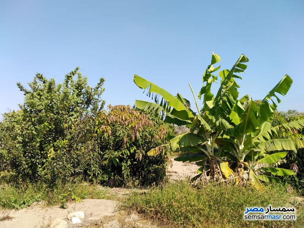 Photo 4 - Farm 10 acre For Sale Qantara Sharq Ismailia