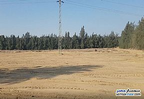 Ad Photo: Farm 100 acre in Wadi Al Natrun  Buhayrah