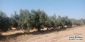 Ad Photo: Farm 102 acre in Wadi Al Natrun  Buhayrah