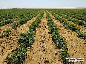 Ad Photo: Farm 15 acre in Fayoum City  Fayyum