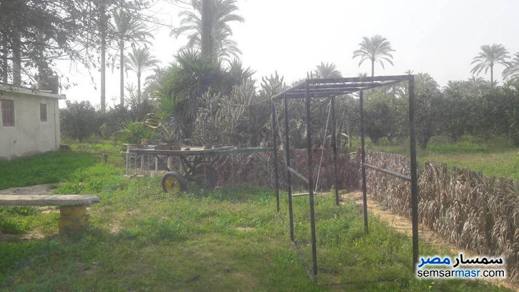 Ad Photo: Farm 20 acre in Nubariyah  Buhayrah