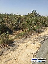 Ad Photo: Farm 37 acre in Borg Al Arab  Alexandira