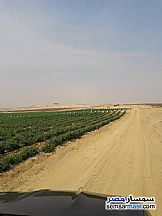 Ad Photo: Farm 8 acre in Tamiya  Fayyum