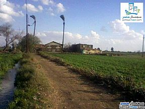 Ad Photo: Farm 12 acre in Minya Al Qamh  Sharqia