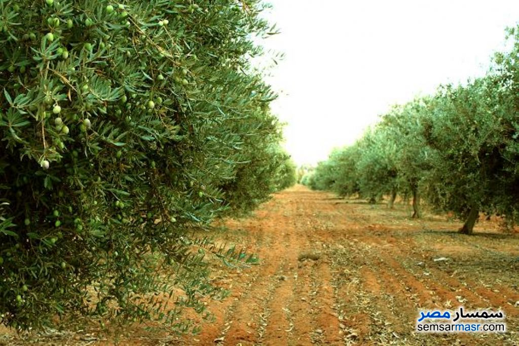Photo 1 - Farm 15 acre For Sale Shandoura Suez