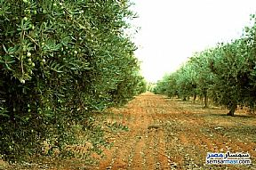 Farm 15 acre For Sale Shandoura Suez - 1