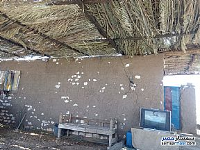 Ad Photo: Farm 7 acre in Bisaliyyah  Aswan