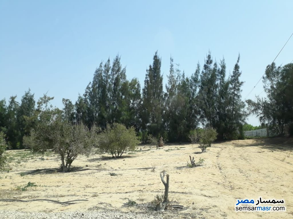 Ad Photo: Farm 6 acre in Ismailia