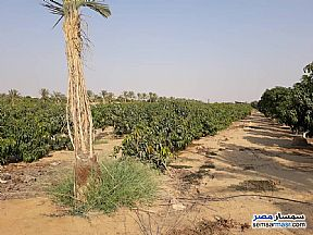 Ad Photo: Farm 6 acre in El Ubour City  Qalyubiyah
