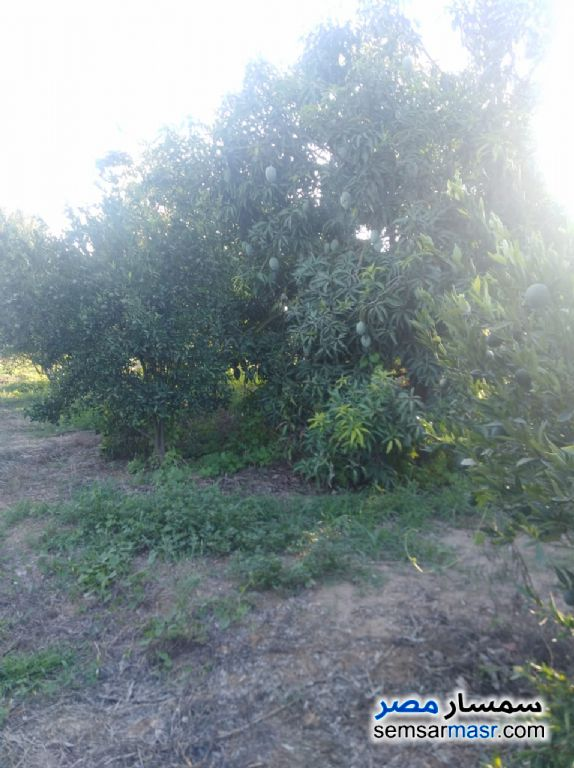 Photo 10 - Farm 10 acre For Sale Badr Buhayrah