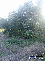 Farm 10 acre For Sale Badr Buhayrah - 10